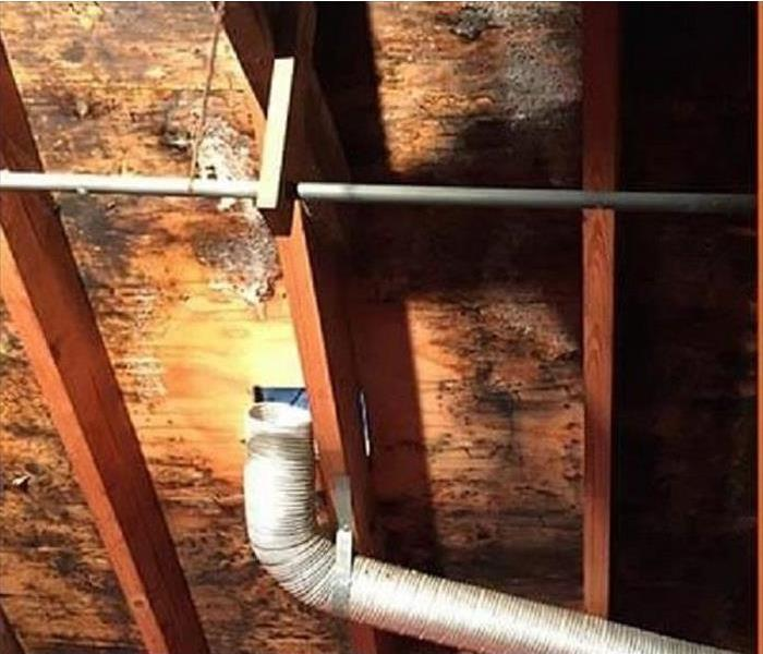 Mold Infestation in a Cutler Ridge Attic Before