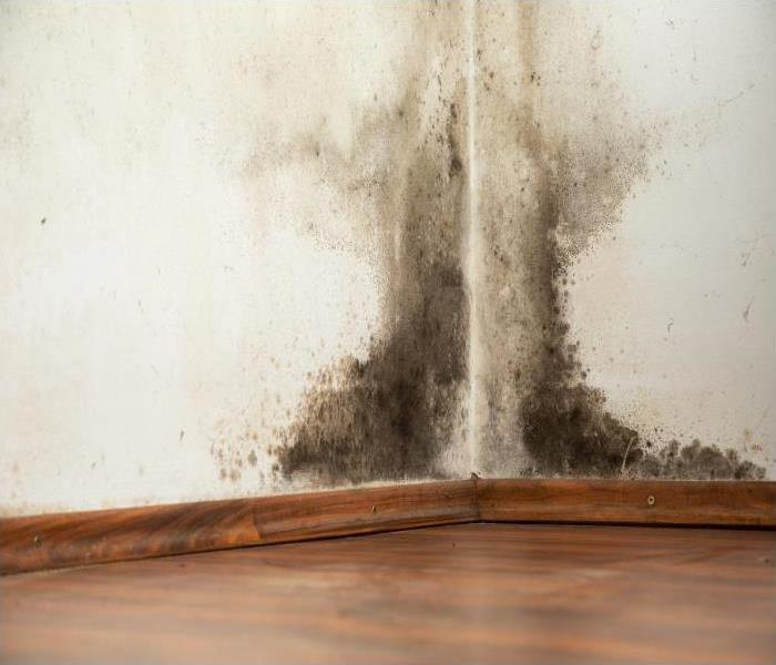 Mold Remediation Understanding Mold And Mold Damage In Your Kendall Home